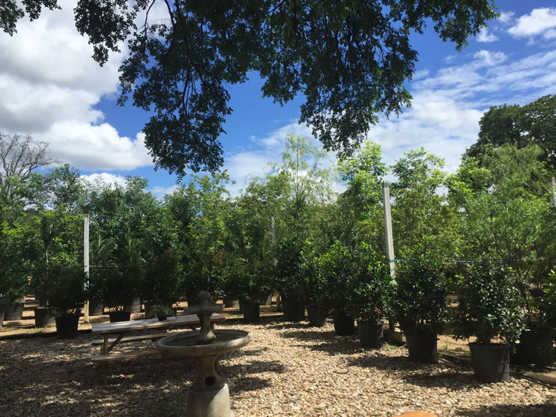 Come And See Our Extensive Tree Nursery 6 Acres Of All Your Favorite Native Species Open To The Public Days A Week