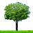 Tree Farm Amp Nursery In Austin Tx D Amp B Tree Company